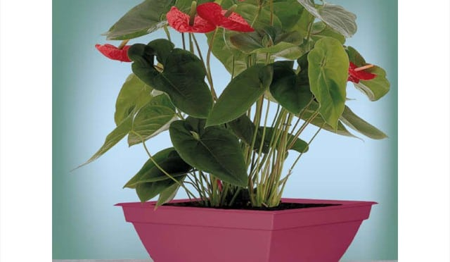 Proper Drainage Is Critical For Potted Plants