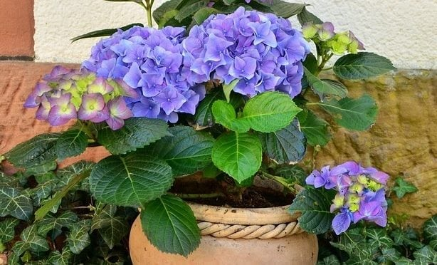 Plant Saucers, Proper Drainage and Care for Indoor Plants