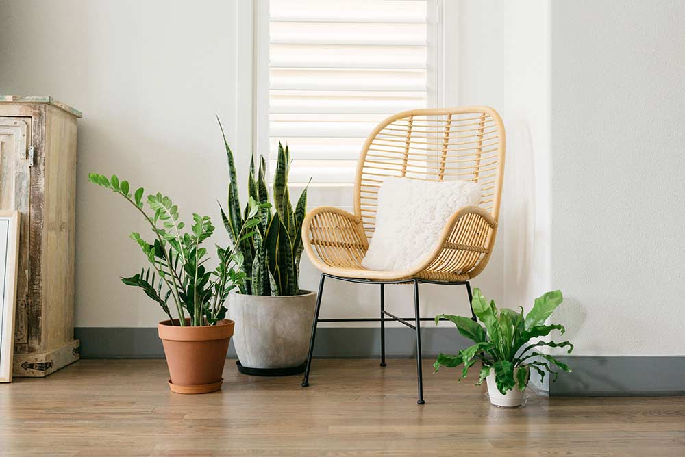 Incorporating Plant Saucers Into Indoor and Outdoor Décor