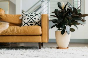 Plant in living room with plant saucer as barrier between planter and white fluffy rug
