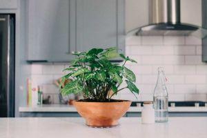 Plant Saucers - Curtis Wagner Plastics