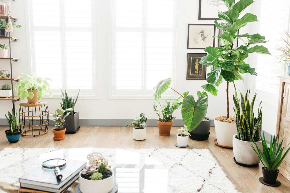Healthy Plants, Happy Home: Indoor Houseplants That Are Hard To Kill