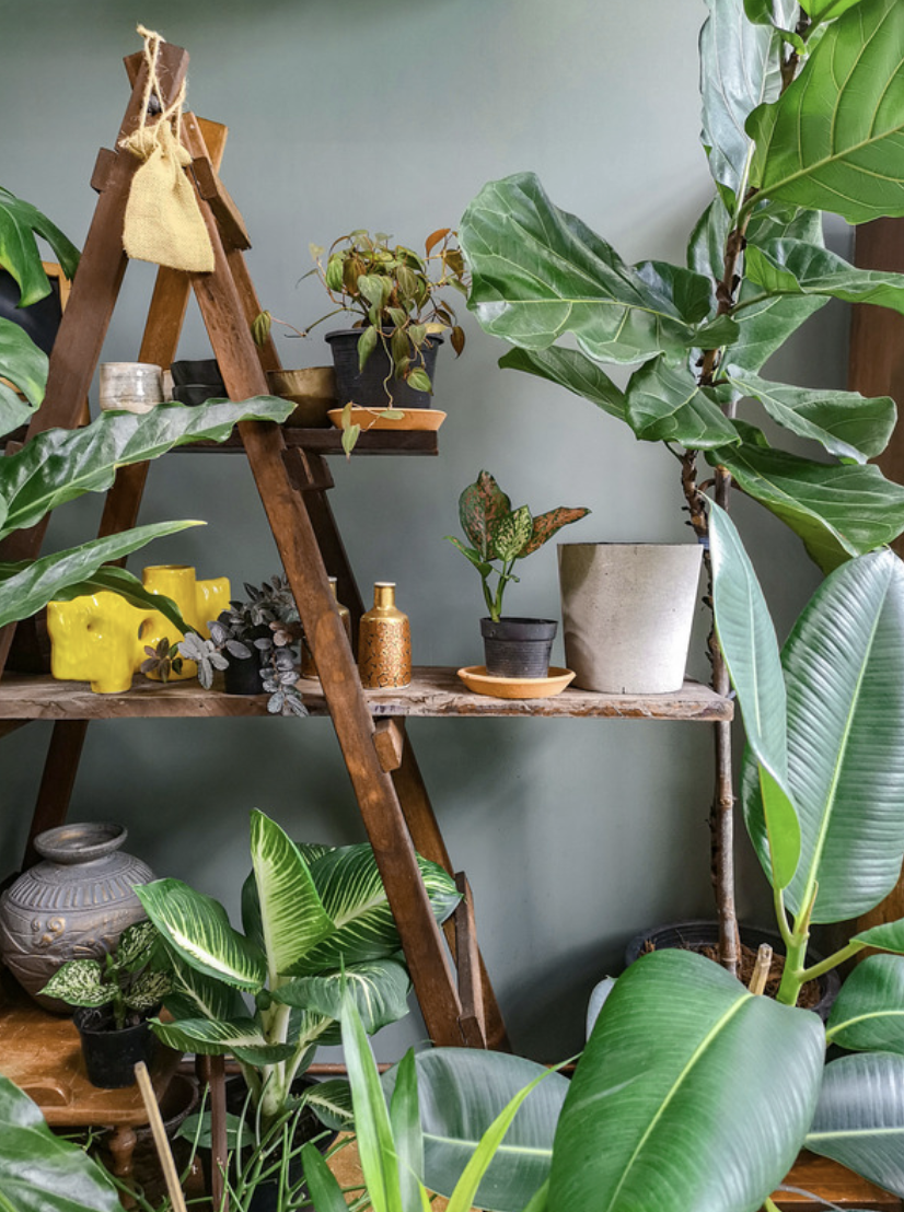 Common Mistakes You May Be Making With Your Indoor Plants