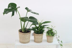 plants in baskets with clear basket liners